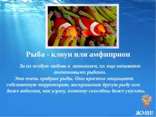 Рыба - клоунили амфиприон За их особую любовь к актиниям, их еще называют ан