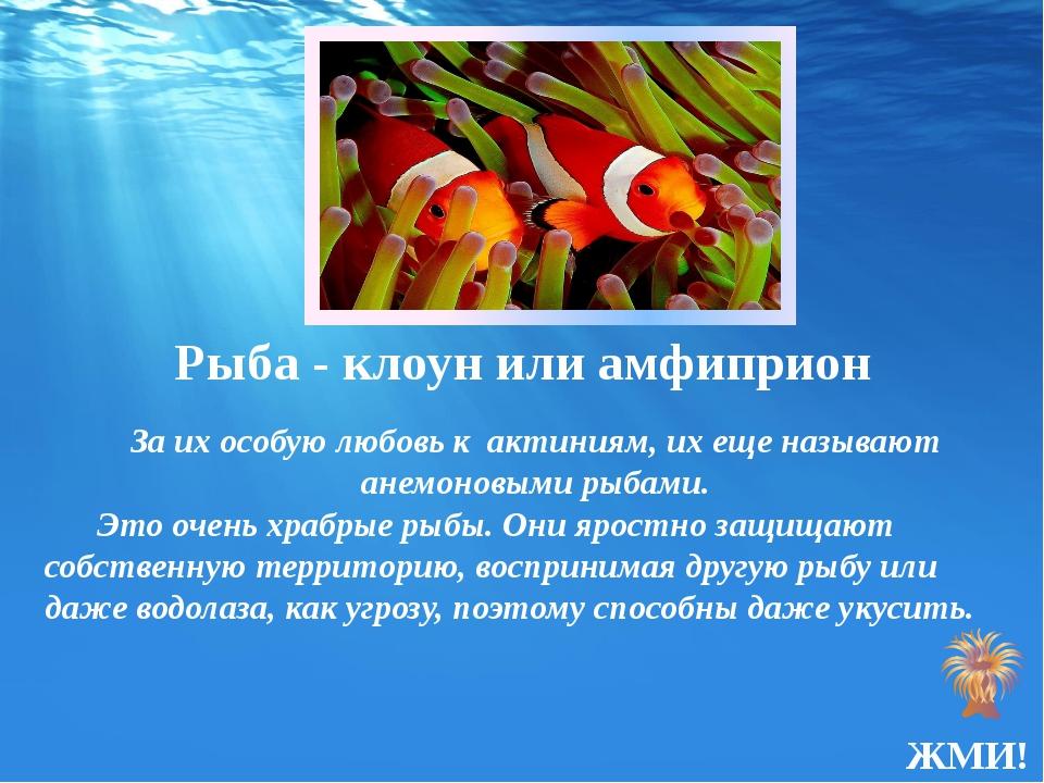 Рыба - клоунили амфиприон За их особую любовь к актиниям, их еще называют ан...