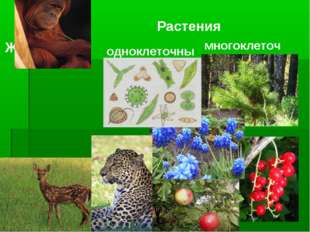 Растения одноклеточные многоклеточные ЖИВОТНЫЕ