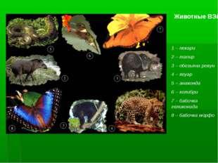 Животные ВЭЛ 1 – пекари 2 – тапир 3 – обезьяна ревун 4 – ягуар 5 – анаконда 6