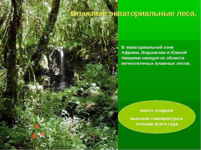 Влажные экваториальные леса. В экваториальной зоне Африки, Индонезии и Южной...