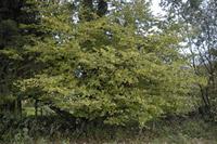 http://www.greeninfo.ru/img/oart/3582_4.jpg