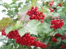 http://piyavkin.ru/wp-content/uploads/2009/11/43-225x168.jpg