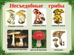 Несъедобные грибы бледная поганка ложные опята пантерный мухомор красный мухо