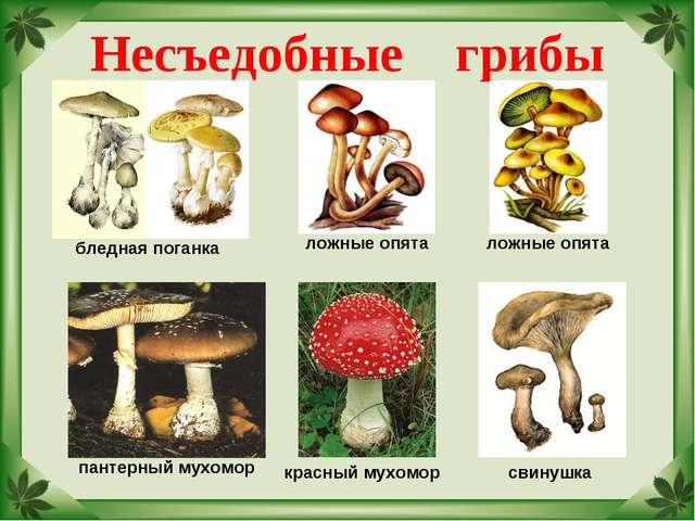 Несъедобные грибы бледная поганка ложные опята пантерный мухомор красный мухо...