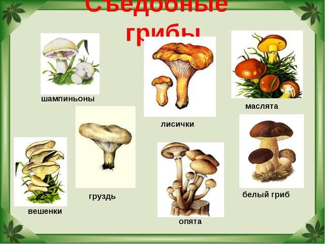 Съедобные грибы белый гриб маслята груздь лисички шампиньоны вешенки опята