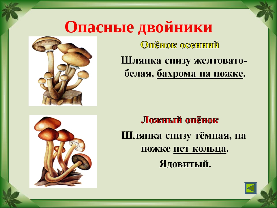 """Опасные двойники Учитель МОУ """"СОШ № 17"""" г.Палласовки Реброва Л.И."""