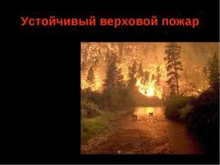 Устойчивый верховой пожар Средняя скорость продвижения фронта пожара 5—15 м/м