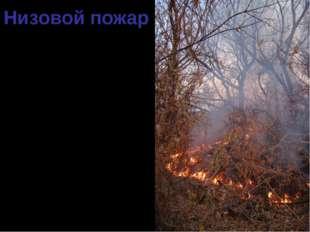 Низовой пожар 90 % всех случаев лесных пожаров – низовые. Распространяются по