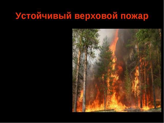 Устойчивый верховой пожар Горение крон деревьев и подстилки происходит одновр...