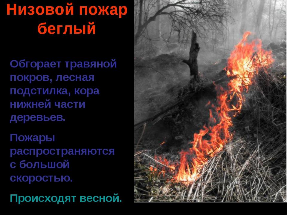 Низовой пожар беглый Обгорает травяной покров, лесная подстилка, кора нижней...