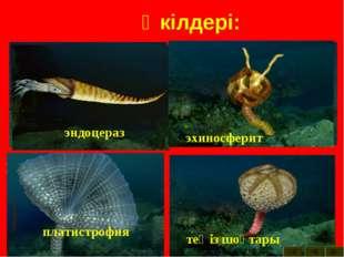 Өкілдері: археокринус астраспис Бауыраяқты моллюска гомилозои гониоцераз теңі