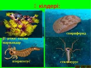 Өкілдері: акантодтар арктинурус биркения дейфон теңіз лилиясы ортоцератид пал