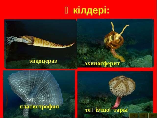 Өкілдері: археокринус астраспис Бауыраяқты моллюска гомилозои гониоцераз теңі...