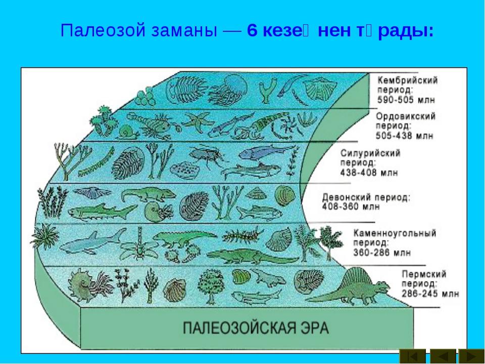 Палеозой заманы — 6 кезеңнен тұрады: