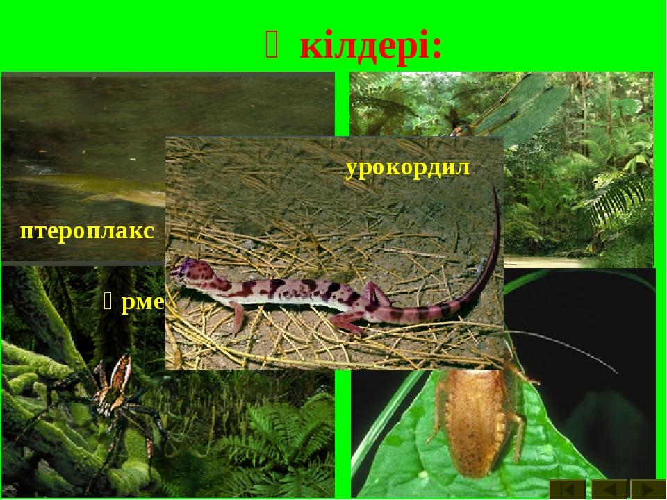 Өкілдері: көбелектер вестлотиан шегіртке көпаяқтылар өрмекші птероплакс инелі...