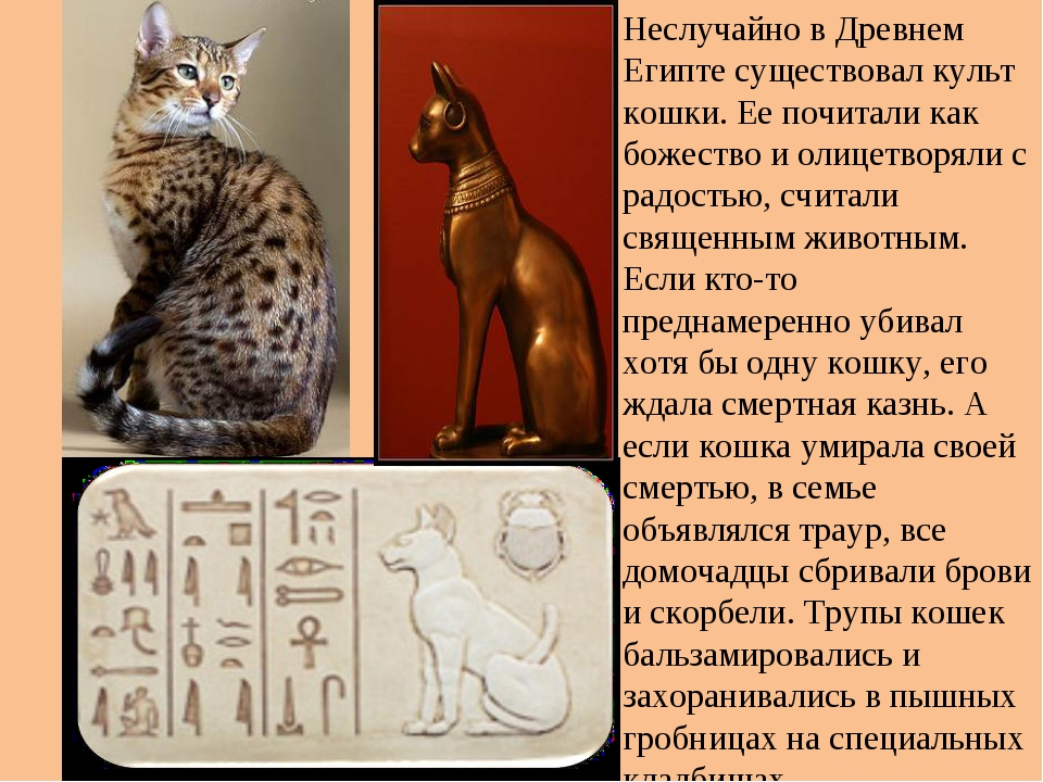 Почему в древнем египте существовал культ этого животного