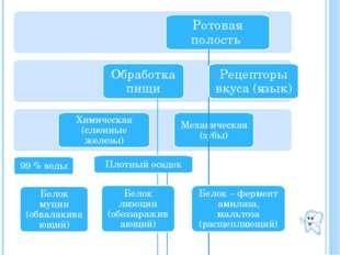 Ротовая полость Обработка пищи Химическая (слюнные железы) Механическая (зуб