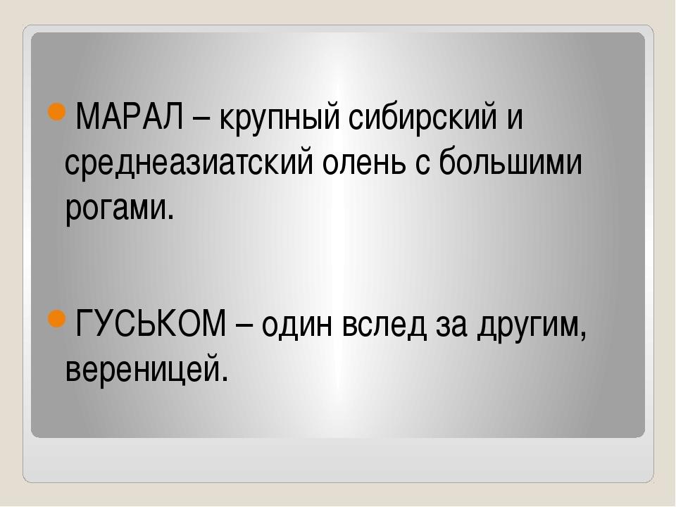 МАРАЛ – крупный сибирский и среднеазиатский олень с большими рогами. ГУСЬКОМ...