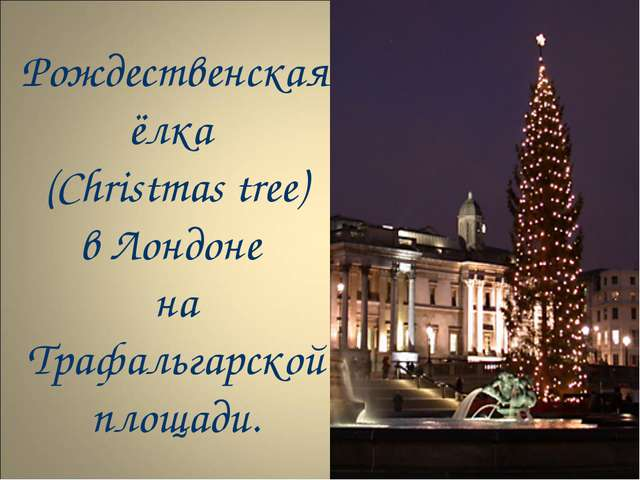 Рождественская ёлка (Christmas tree) в Лондоне на Трафальгарской площади.
