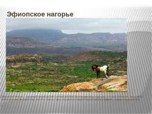Эфиопское нагорье Эфиопское нагорье – огромный горный массив с цепями высоких