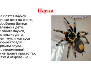 Пауки Все боятся пауков Больше всех на свете, А особенно боятся Маленькие дет