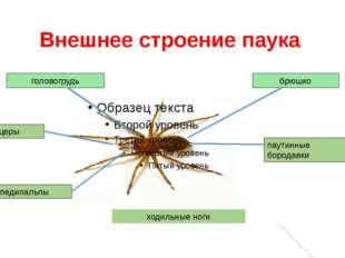 Внешнее строение паука головогрудь брюшко паутинные бородавки ходильные ноги