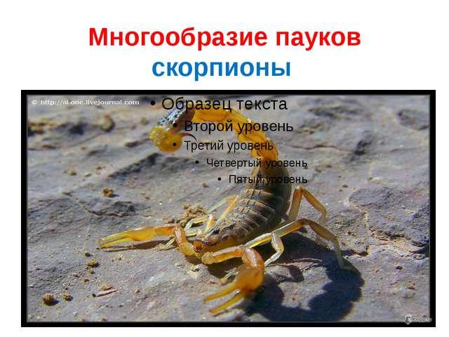 Многообразие пауков скорпионы