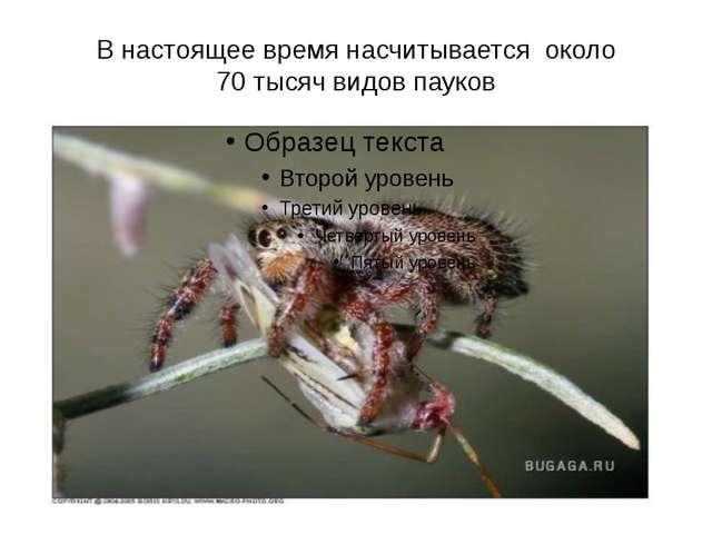 В настоящее время насчитывается около 70 тысяч видов пауков