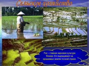 Рис – главная зерновая культура Японии. Его выращивают на орошаемых землях по