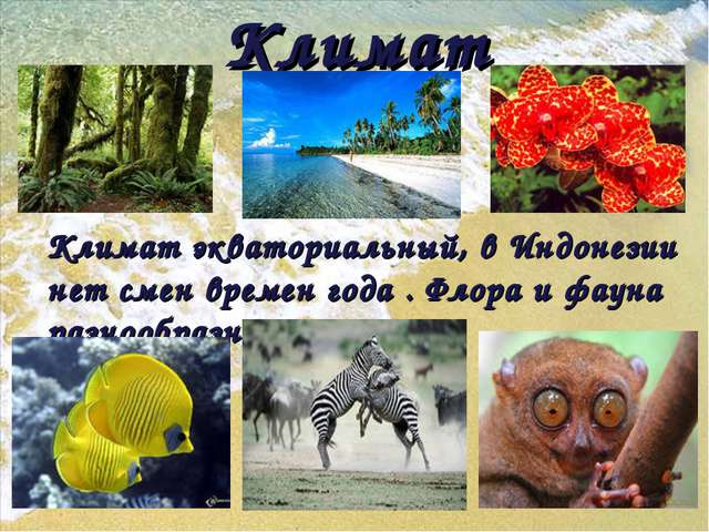Климат Климат экваториальный, в Индонезии нет смен времен года . Флора и фаун...