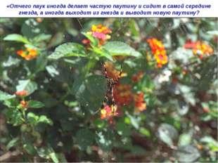 «Отчего паук иногда делает частую паутину и сидит в самой середине гнезда, а