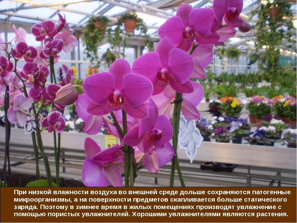 При низкой влажности воздуха во внешней среде дольше сохраняются патогенные...