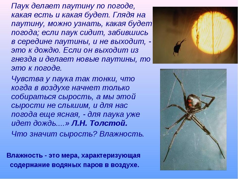 Паук делает паутину по погоде, какая есть и какая будет. Глядя на паутину, м...