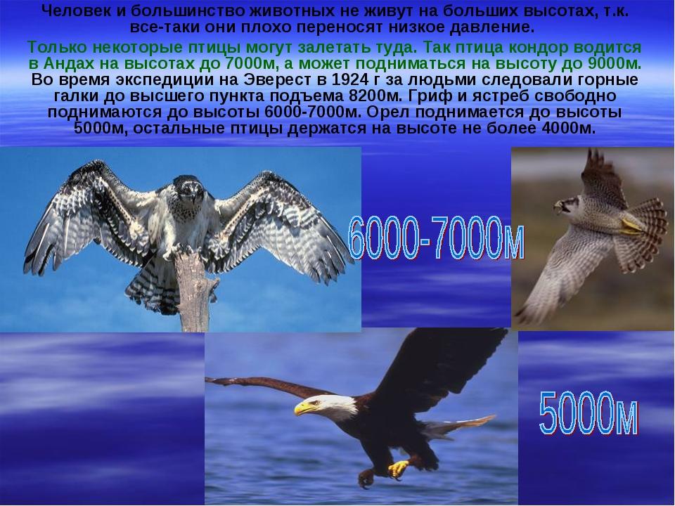 Человек и большинство животных не живут на больших высотах, т.к. все-таки они...