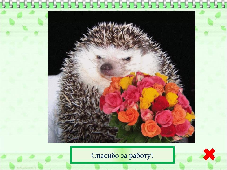 Источники: http://www.ahiva.info/Colorear/Animales/Erizos/erizo-01.gif рисун...