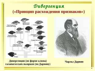 Дивергенция («Принцип расхождения признаков») Чарльз Дарвин Дивергенция (по ф