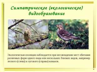 Симпатрическое (экологическое) видообразование Экологическая изоляция наблюда