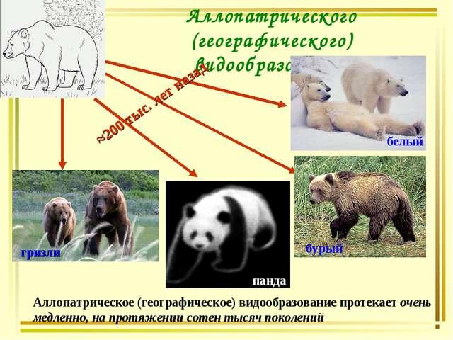 Аллопатрического (географического) видообразования гризли ≈200 тыс. лет назад...