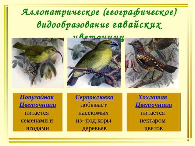 Аллопатрическое (географическое) видообразование гавайских цветочниц Попугайн...