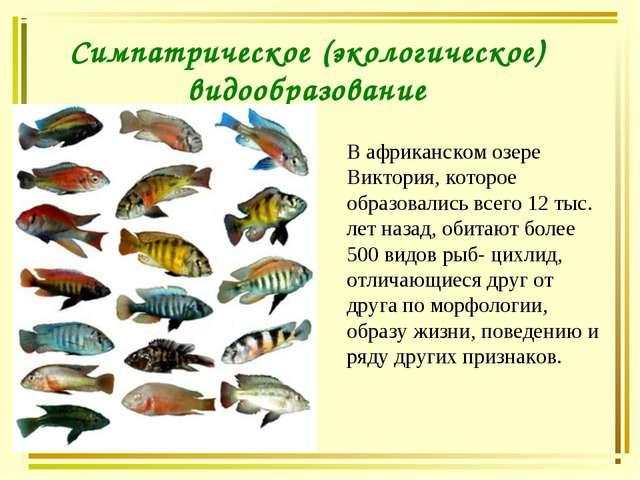 Симпатрическое (экологическое) видообразование В африканском озере Виктория,...