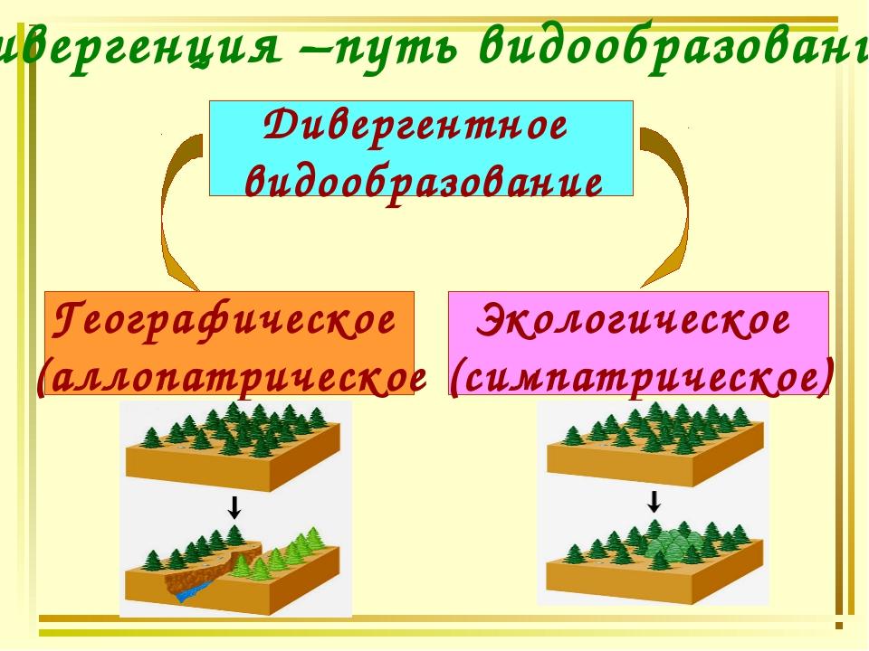 Дивергенция –путь видообразования Дивергентное видообразование Географическое...