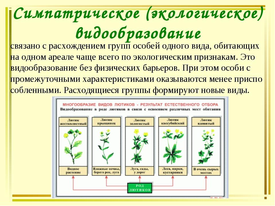 Симпатрическое (экологическое) видообразование связано с расхождением групп о...
