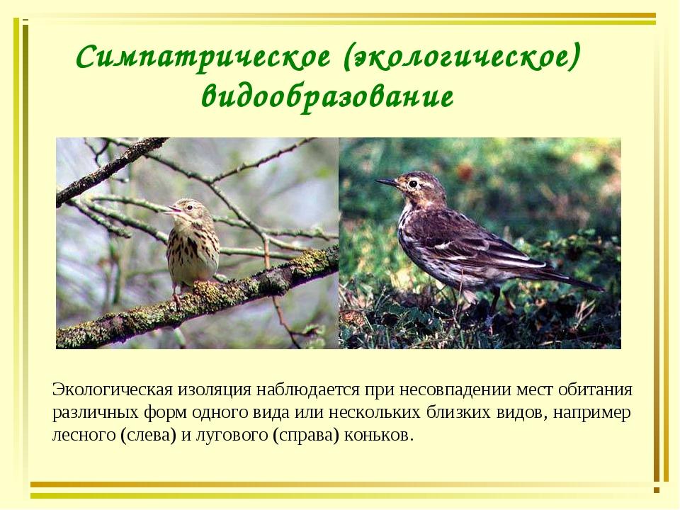 Симпатрическое (экологическое) видообразование Экологическая изоляция наблюда...