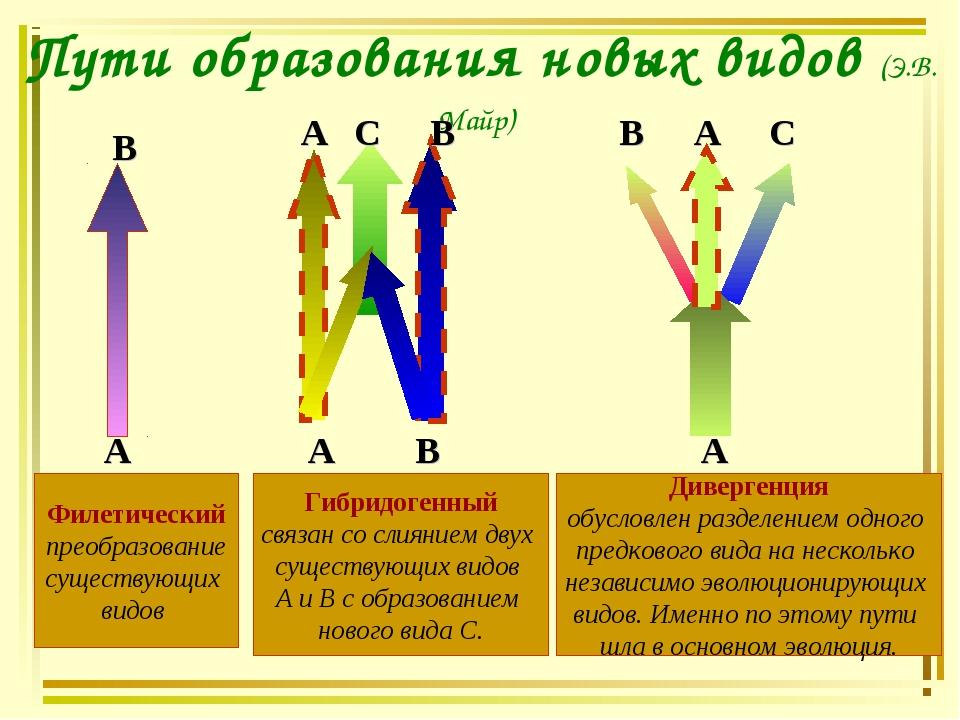 Пути образования новых видов (Э.В. Майр) А А А В В В С С А А В Филетический п...