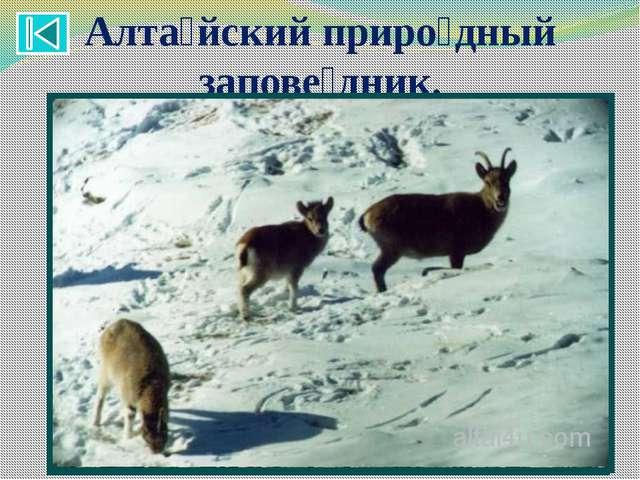 7 чудес Алтая : Природный парк Укок . Денисова пещера. Гора Белуха. Алта́йски...