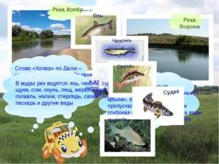 Река Ворона Слово «Хопер» по Далю – «притон диких гусей». По реке действител