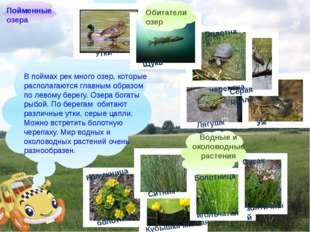В поймах рек много озер, которые располагаются главным образом по левому бер
