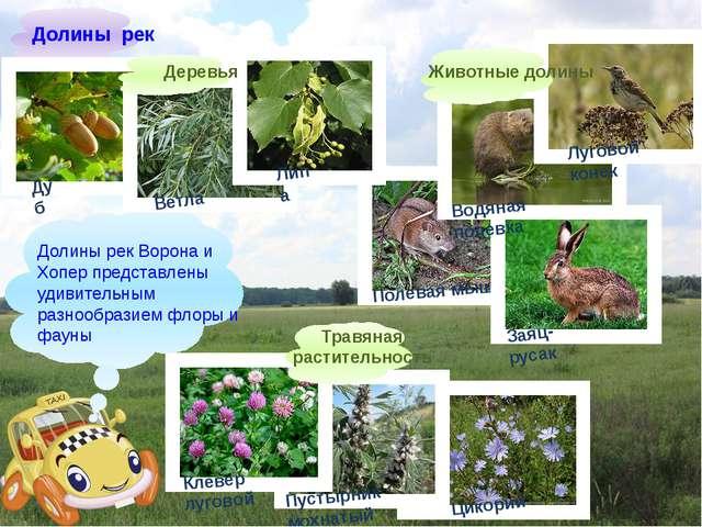 Долины рек Ворона и Хопер представлены удивительным разнообразием флоры и фа...