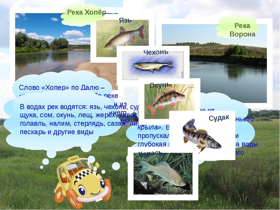 Река Ворона Слово «Хопер» по Далю – «притон диких гусей». По реке действител...